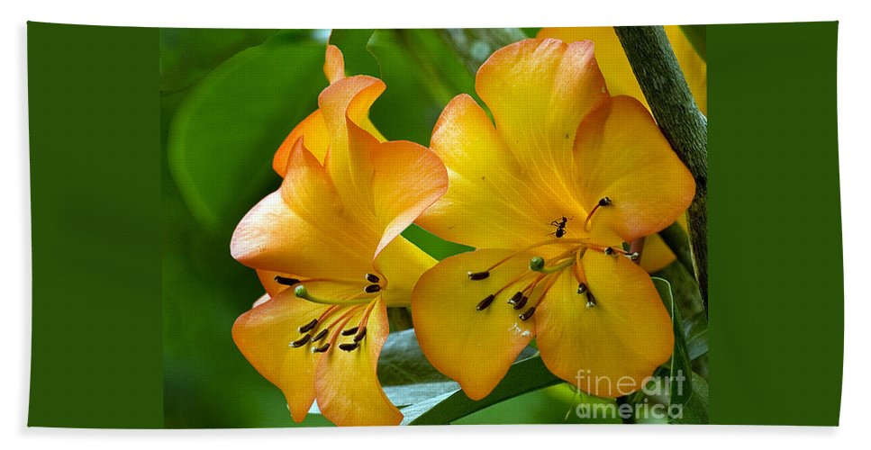 Flower Bath Sheet featuring the photograph Golden Tropical Flowers by Darleen Stry