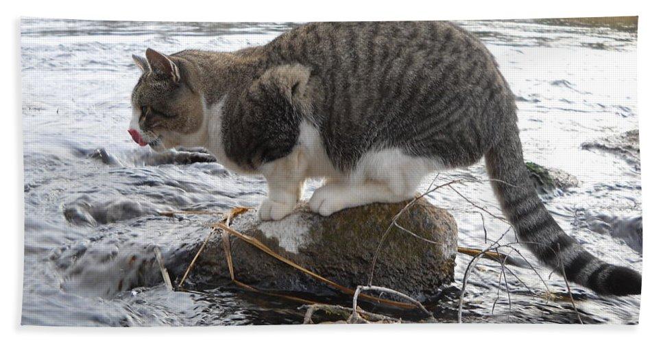 Cat Bath Sheet featuring the photograph Gonna Catch A Yummy Fish by Kent Lorentzen