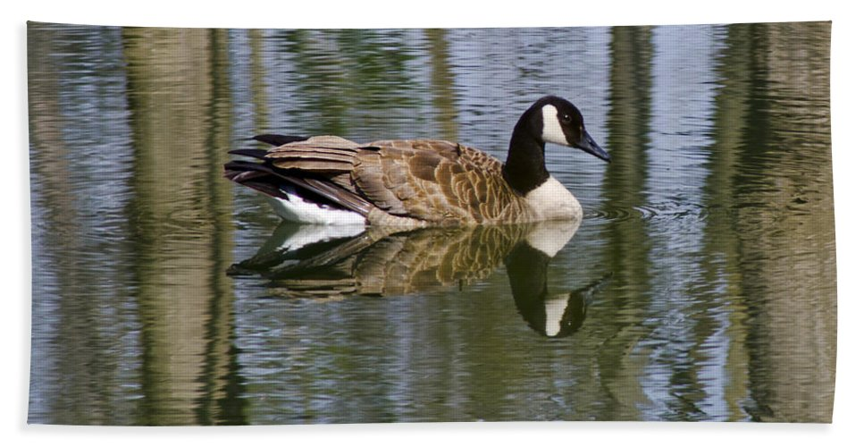 Geese Hand Towel featuring the photograph Goose Reflections by LeeAnn McLaneGoetz McLaneGoetzStudioLLCcom