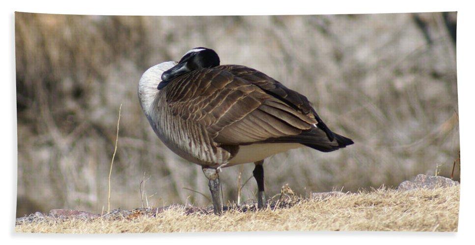 Goose Bath Sheet featuring the photograph Goose Rubbing Its Back by Lori Tordsen