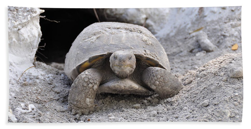 Turtle Bath Sheet featuring the photograph Gopher Tortoise by Rich Bodane