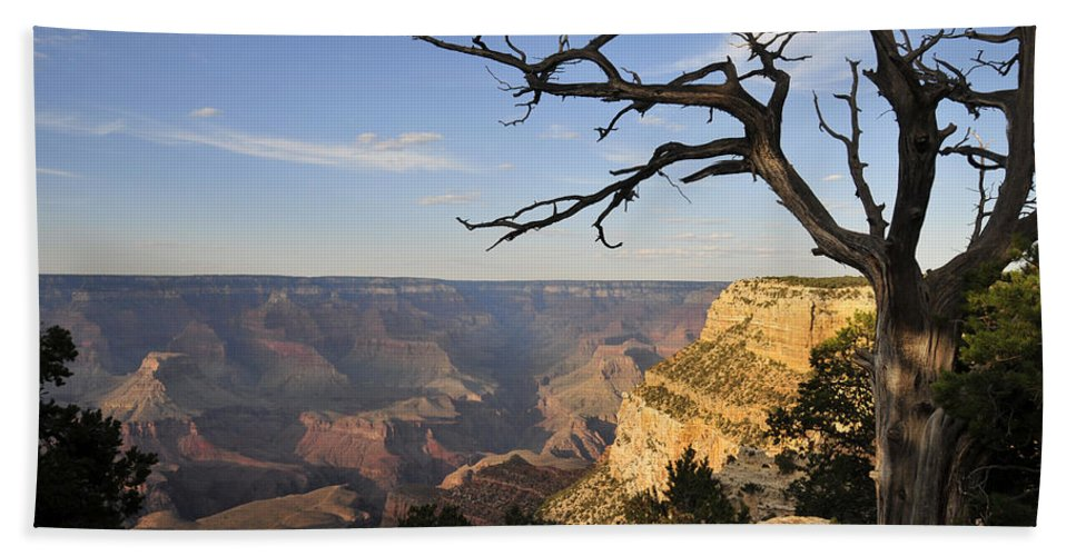 Tree Bath Sheet featuring the photograph Grand Canyon 4 by David Arment