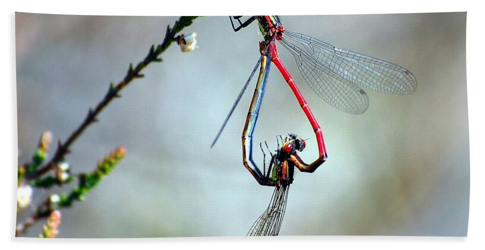 Large Red Damselflies Hand Towel featuring the photograph Grande Rouge Amour by Gavin Macrae