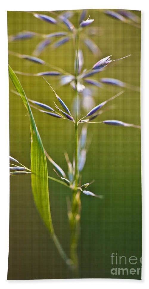 Nature Bath Sheet featuring the photograph Grass In Flower by Heiko Koehrer-Wagner