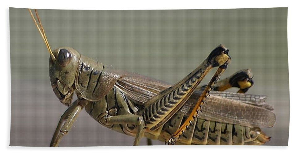 Grasshopper Bath Sheet featuring the photograph Grasshopper Profile by Living Color Photography Lorraine Lynch