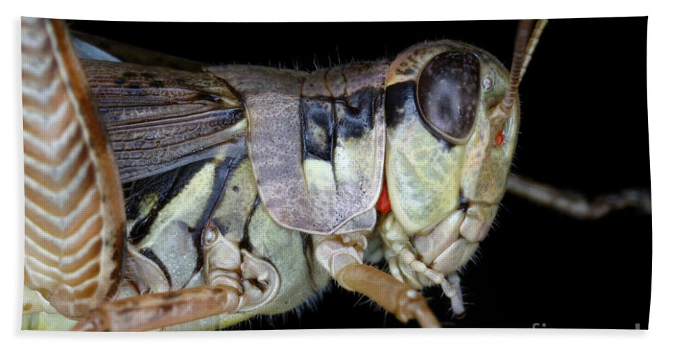 Animal Hand Towel featuring the photograph Grasshopper With Parasitic Mite by Ted Kinsman