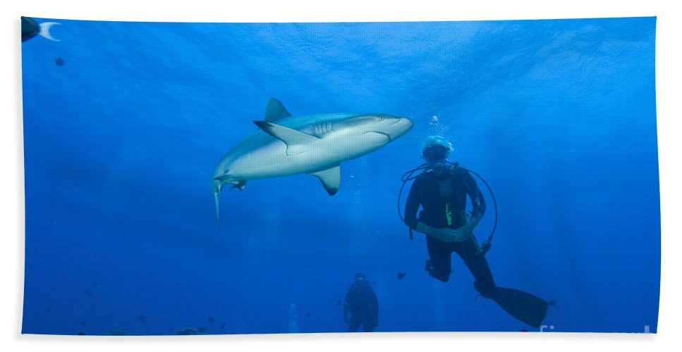 English Reef Bath Sheet featuring the photograph Gray Reef Shark With Divers, Papua New by Steve Jones
