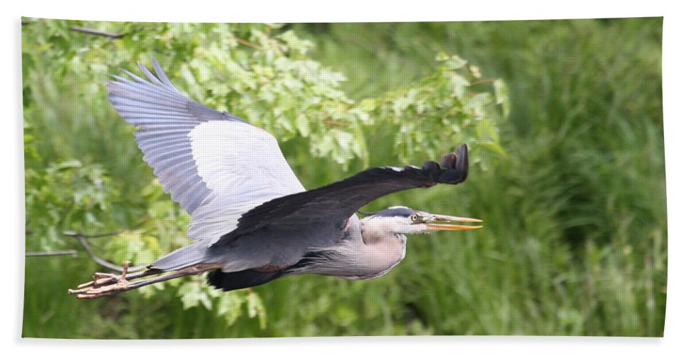 Great Blue Heron Hand Towel featuring the photograph Great Blue Flight by Teresa McGill