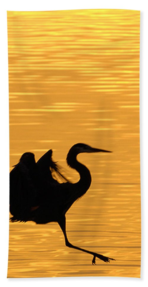 Great Blue Heron Bath Sheet featuring the photograph Great Blue Heron Landing In Golden Light by Randall Branham