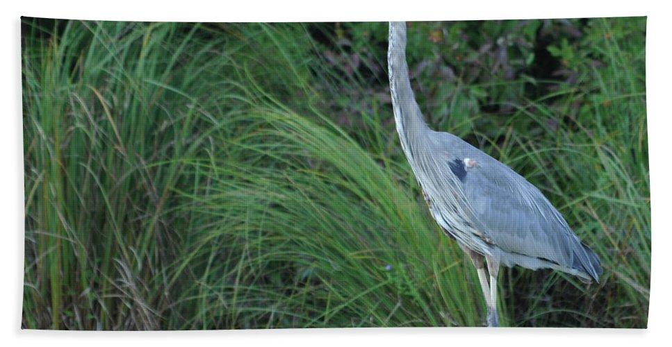 Bird Hand Towel featuring the photograph Great Blue Heron by Ronald Grogan