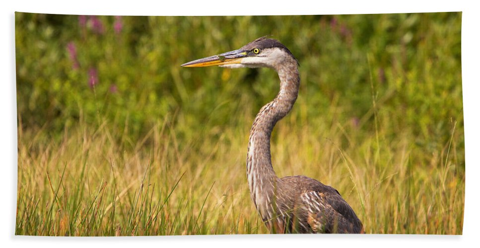 Great Blue Heron Hand Towel featuring the photograph Great Blue Heron by Stephanie McDowell