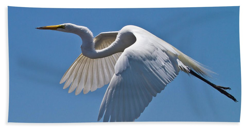 Great Egret Bath Sheet featuring the photograph Great Egret by Bill Lindsay