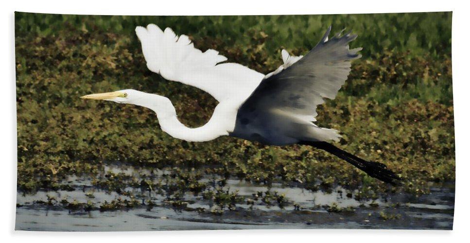 Great Egret Bath Sheet featuring the photograph Great Egret In Flight by Saija Lehtonen