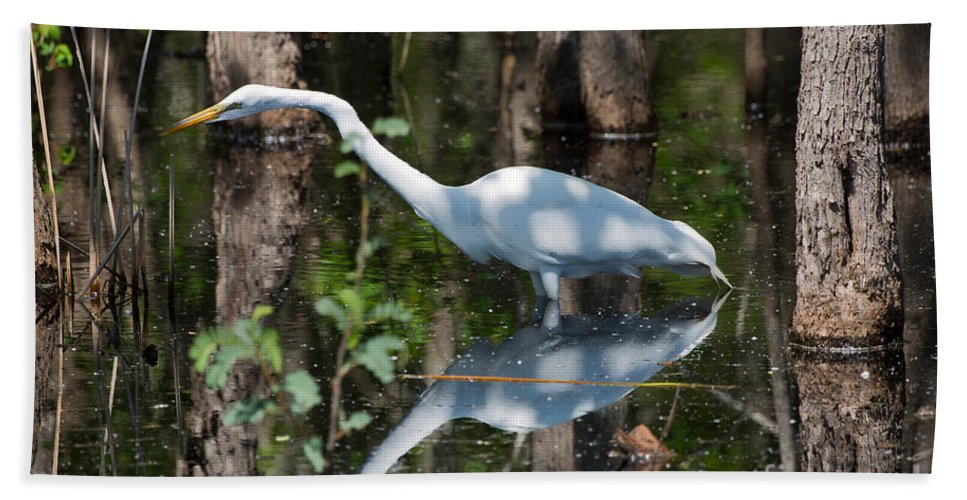 Egret Hand Towel featuring the photograph Great Egret by Louise Heusinkveld