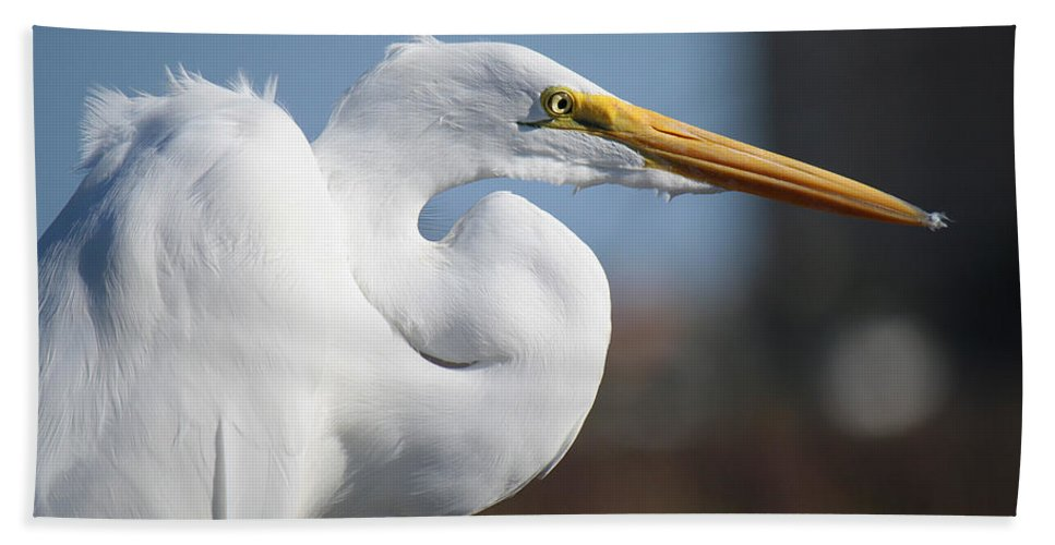 Roena King Bath Sheet featuring the photograph Great Egret Portrait by Roena King