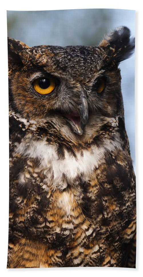 Doug Lloyd Hand Towel featuring the photograph Great Horned Owl Portrait by Doug Lloyd