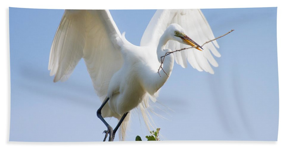 Bird Bath Sheet featuring the photograph Great White Egret by Bill Swindaman