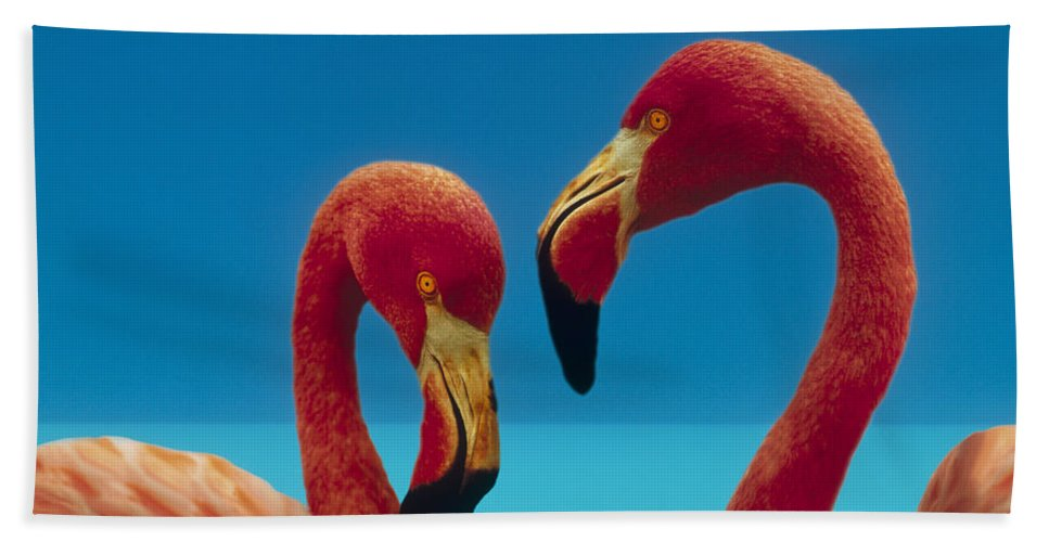 00172310 Bath Towel featuring the photograph Greater Flamingo Courting Pair by Tim Fitzharris