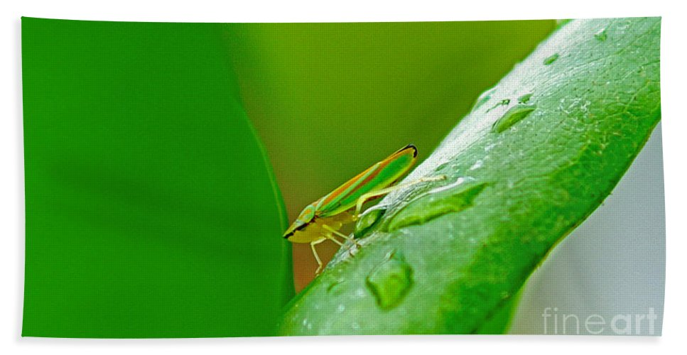 Bugs Bath Sheet featuring the photograph Green And Yellow Bug by Randy Harris