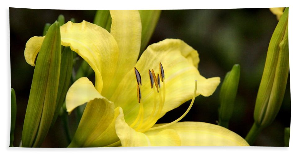 Lily Bath Sheet featuring the photograph Green And Yellow - Lily by Travis Truelove