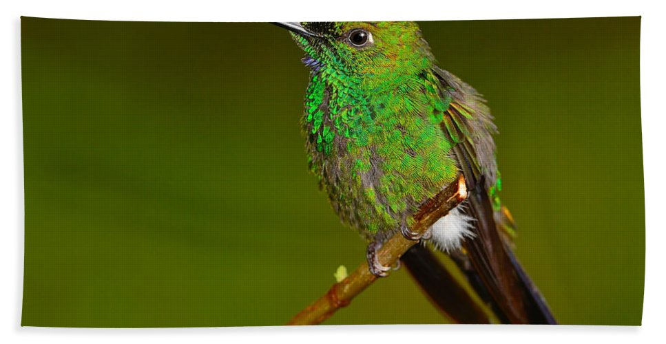 Green-crowned Brilliant Hand Towel featuring the photograph Green-crowned Brilliant by Tony Beck
