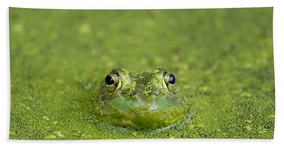 Frog Hand Towel featuring the photograph Green Frog Eyes by Stephanie McDowell