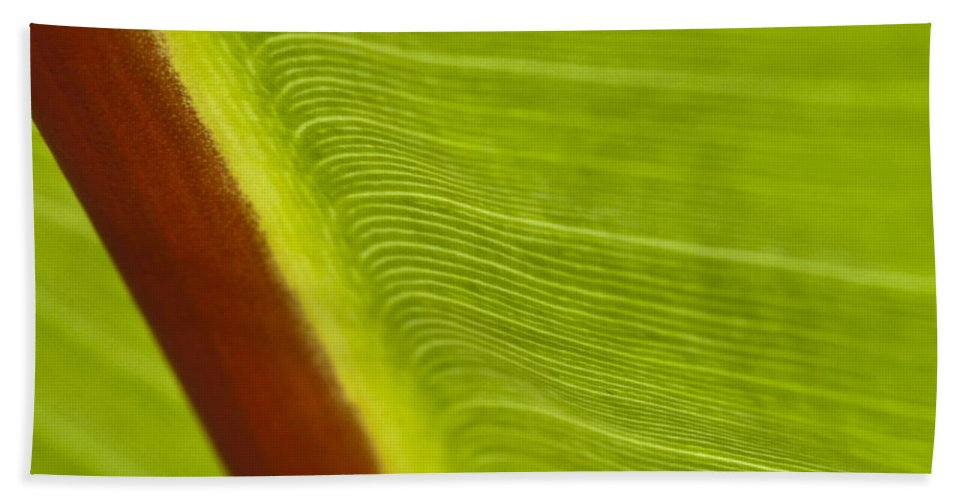 Leaf Bath Sheet featuring the photograph Green Leaves Series 8 by Heiko Koehrer-Wagner