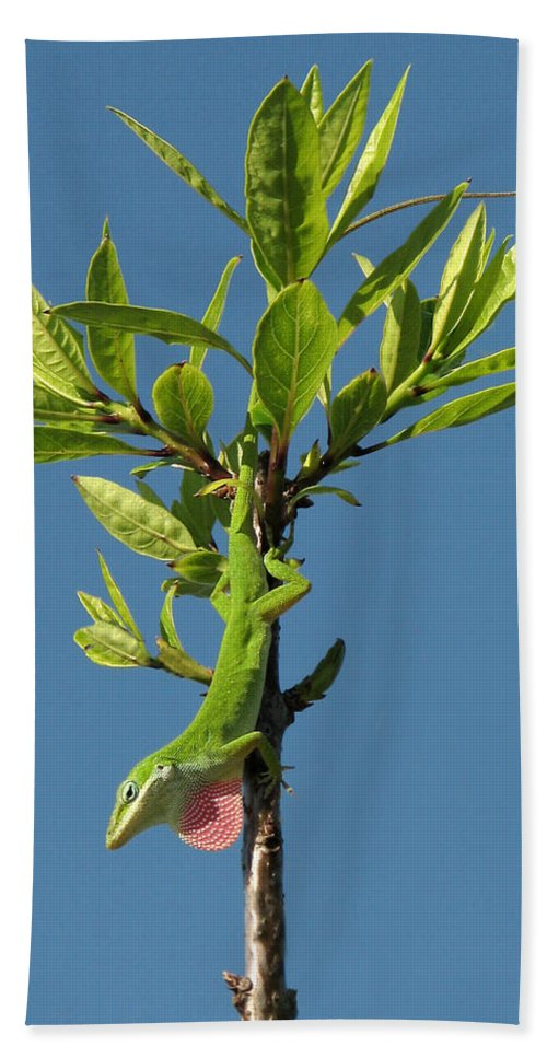 Nature Hand Towel featuring the photograph Green Lizard In Love by Peg Urban