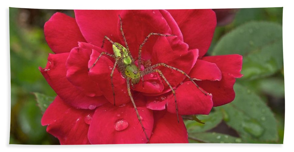 America Bath Sheet featuring the photograph Green Lynx Spider 8587 3256 by Michael Peychich