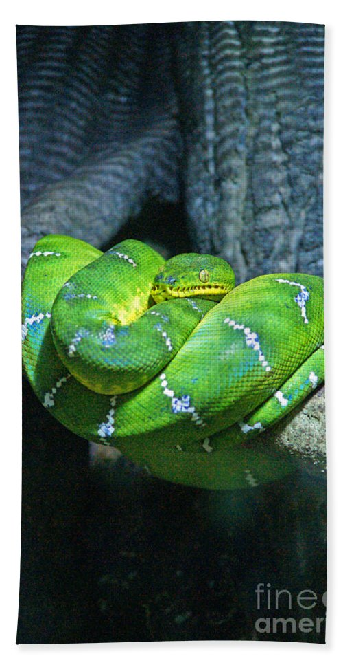 Snakes Bath Sheet featuring the photograph Green Snake by Randy Harris