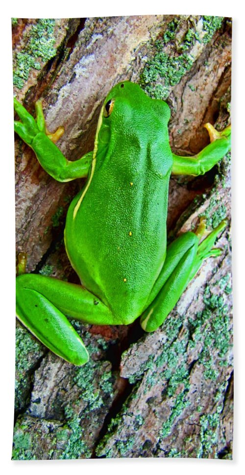 Bath Sheet featuring the photograph Green Tree Frog by Debbie Portwood