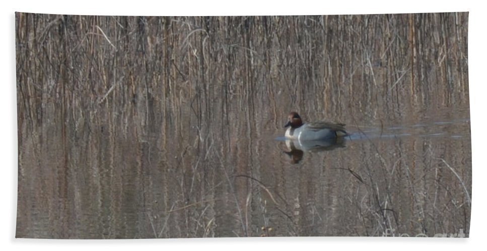 Birds Bath Sheet featuring the photograph Green-winged Teal by Donna Brown