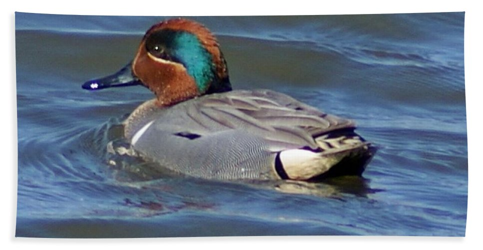 Waterfowl Bath Sheet featuring the photograph Green Winged Teal by Joe Faherty