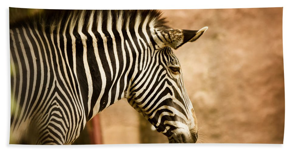 Zebra Bath Sheet featuring the photograph Grevys Zebra by Linda Tiepelman