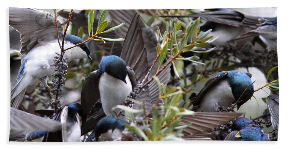 Bird Bath Sheet featuring the photograph Grey Feathers - Tree Swallow by Travis Truelove