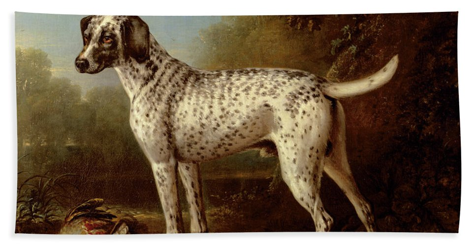 Grey Bath Towel featuring the painting Grey Spotted Hound by John Wootton