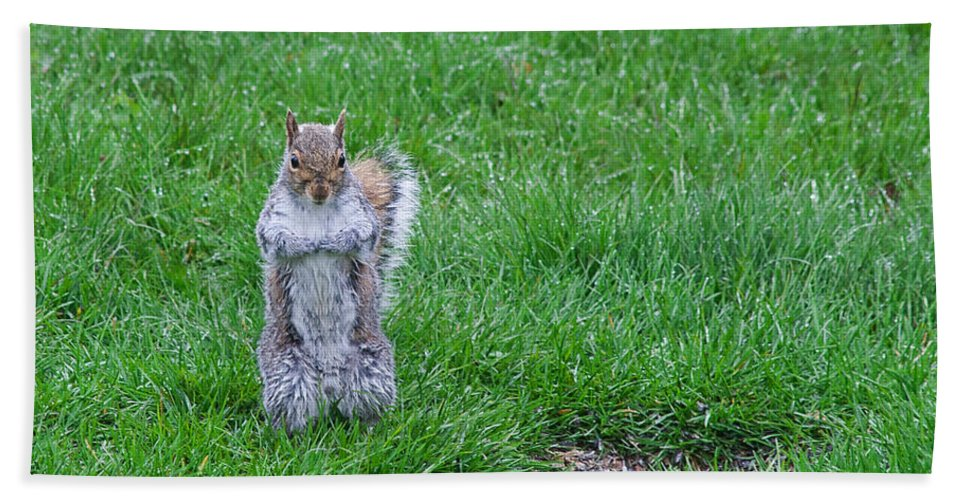 Squirrel Bath Towel featuring the photograph Grey Squirrel In The Rain II by Jeff Galbraith