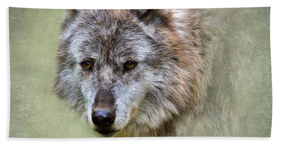 Wolf Bath Sheet featuring the photograph Grey Wolf Portrait by Louise Heusinkveld