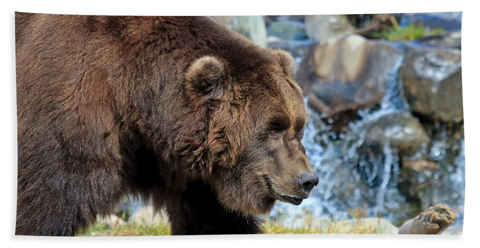 Grizzly Bath Sheet featuring the photograph Griz by Athena Mckinzie