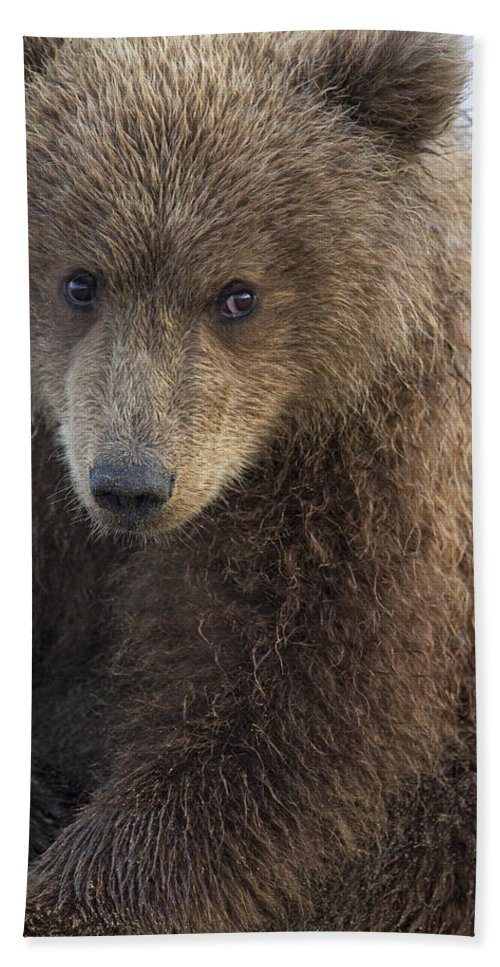Mp Hand Towel featuring the photograph Grizzly Bear Ursus Arctos Horribilis by Ingo Arndt