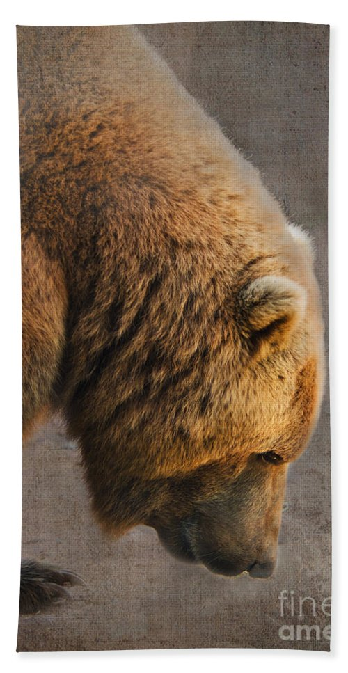Bear Bath Sheet featuring the photograph Grizzly Hanging Head by Betty LaRue