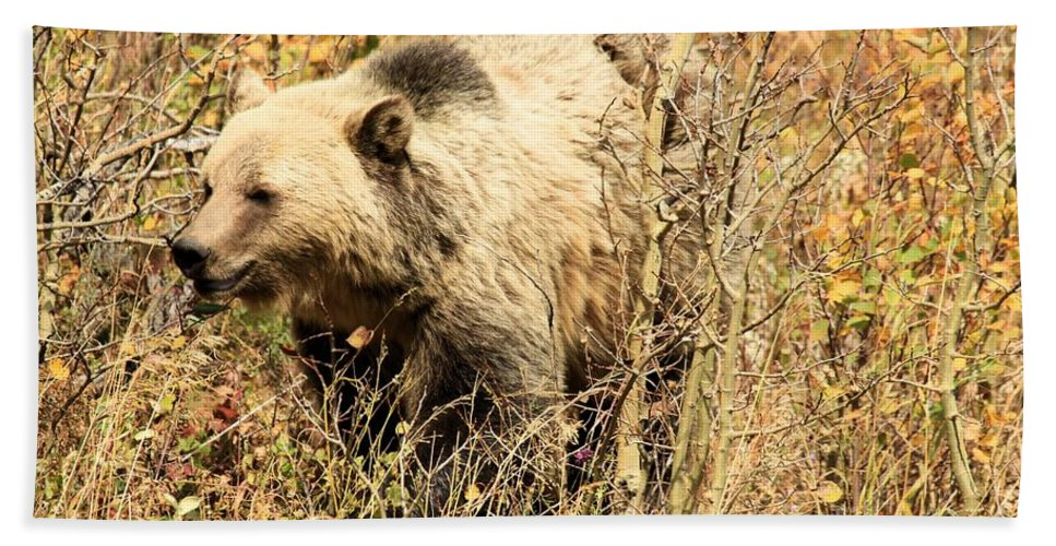 Grizzly Bear Hand Towel featuring the photograph Grizzly In The Brush by Adam Jewell