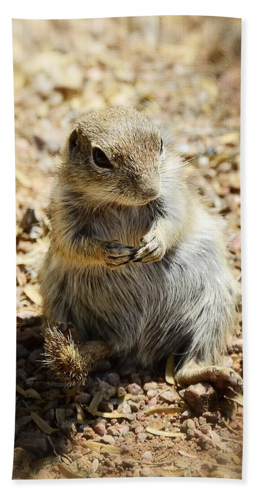 Ground Squirrel Bath Towel featuring the photograph Ground Squirrel by Saija Lehtonen