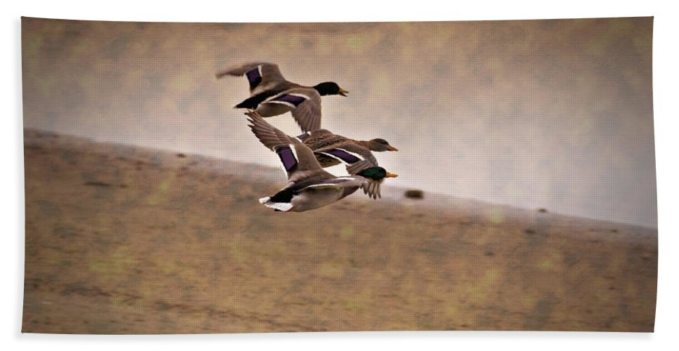 Ducks In Flight Bath Sheet featuring the photograph Grouping V1 by Douglas Barnard