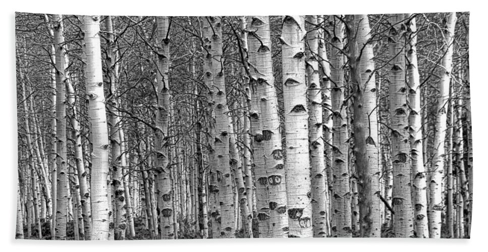 Art Bath Sheet featuring the photograph Grove Of Birch Trees by Randall Nyhof
