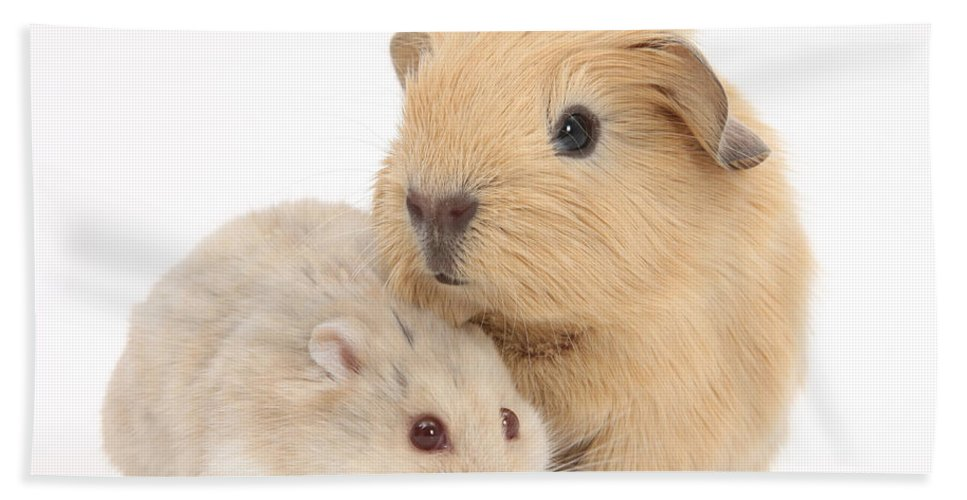 Animal Hand Towel featuring the photograph Guinea Pig And Hamster by Mark Taylor