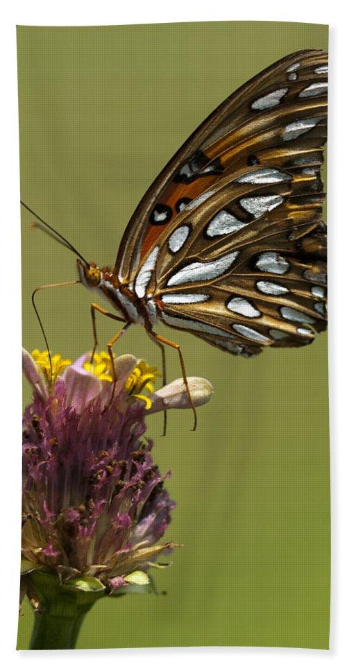 Agraulis Vanillae Bath Sheet featuring the photograph Gulf Fritillary Butterfly - Agraulis Vanillae by Kathy Clark