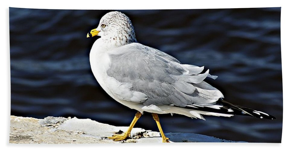 Gull Bath Sheet featuring the photograph Gull 2 by Joe Faherty