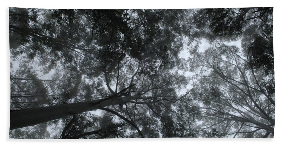 Gum Trees Bath Sheet featuring the photograph Gum Forest Australia 1 by Bob Christopher