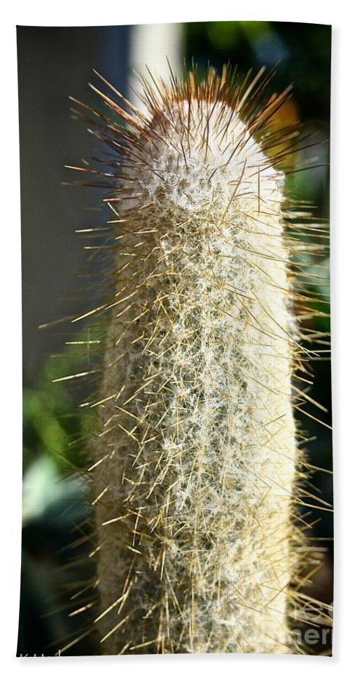 Outdoors Bath Sheet featuring the photograph Hairy Cactus by Susan Herber